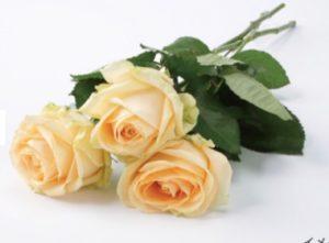ユニクロパークのバラ一束